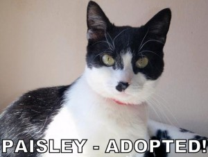 Paisley (1)