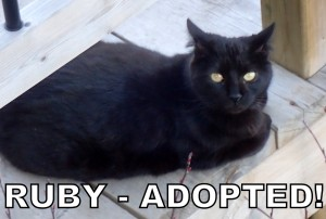 Ruby - Adopted